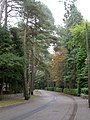 Branksome Park, Bury Road - geograph.org.uk - 1502876.jpg