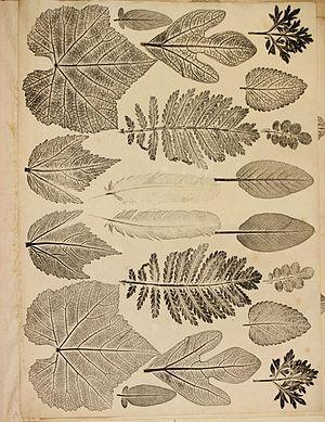 Joseph Breintnall - Early printed sample of American leaves made by Joseph Breintnall in the 1730s