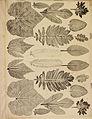 Breintnall Leaf Impressions.jpg