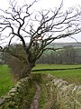 Bridleway to Bolton Abbey - geograph.org.uk - 676814.jpg