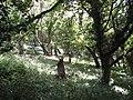 Broadleaf woodland - geograph.org.uk - 946775.jpg