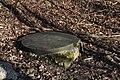 Brunnen Rotach 5418-1.JPG