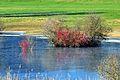 Bubikon - Hüsliriet 2012-01-16 12-28-54.JPG