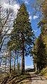 Buchenbach Baum 20190418 174402.jpg