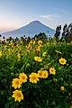 Bunga Posong 01.jpg