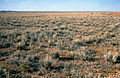 CSIRO ScienceImage 4024 Mitchell Grass near Alice Springs in Central Australia NT 1978.jpg