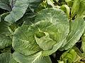 Cabbage (3741604131).jpg