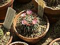 CactussesfrmBotanicGardenofBAS.jpg