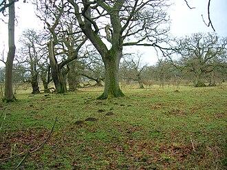 Chatelherault Country Park - Image: Cadzow oaks chase