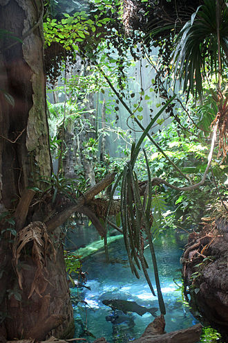 California Academy of Sciences - View of the Amazonian flooded forest in the rainforest exhibit. Arapaima, arowana, catfish, pacus, cichlids and other fish species can be seen from a submerged acrylic tunnel.