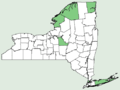 Callitriche hermaphroditica NY-dist-map.png