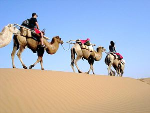 Tengger Desert - Image: Camelsin Tengger