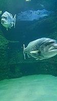 Cape Aquarium 20180719 211909 (10).jpg