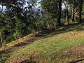 Cerro Condell, sendero 40 (16600884329).jpg