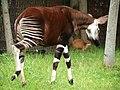 Chester Zoo (14754997873).jpg