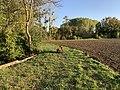 Chien près Champ Fasses - Saint-Cyr-sur-Menthon (FR01) - 2020-10-31 - 2.jpg
