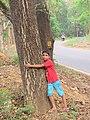 Child hugging tree at Peravoor (3).jpg