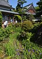 Chiryu Yatsuhashi Muryojuji Iris laevigata ac (2).JPG