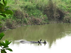 Chitwan National Park (2010)-49.jpg
