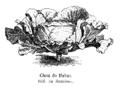 Chou de Habas Vilmorin-Andrieux 1904.png