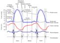 Ciclo Cardíaco Ventrículo Esquerdo.png
