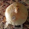 Cipolla di Giarratana.jpg