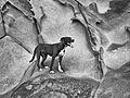 Cliff dog (6017387743).jpg
