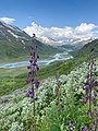 Climbing amongst wild flowers.jpg