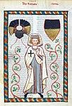Codex Manesse Tannhäuser.jpg