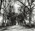 Coley Avenue, Reading, c. 1845.jpg