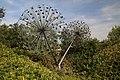 Collodi, Parco di Pinocchio, l'albero degli zecchini 01.jpg