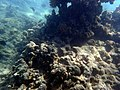 Coral Shadow (23970834911).jpg