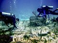 Coral surveys (27146379490).jpg