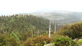 Alerce Costero National Park - Image: Cordillera Pelada