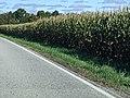 Cornfield along County Road 6 in Delta, Ohio.jpg