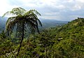Costa Rica DSCN2164-new (30762132830).jpg