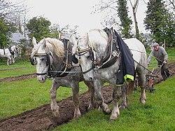 cheval de trait vikidia