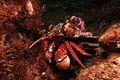 Crab *.jpg