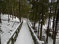 Crawford Lake Trail, Ontario, Canada6.JPG