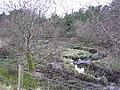 Creggan Wood - geograph.org.uk - 112136.jpg