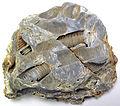 Crinoidal vuggy chert (Carboniferous; limestone quarry near Komsomolske, southeastern Ukraine) - 2.jpg