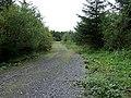 Crynant Forestry Walk - geograph.org.uk - 960060.jpg
