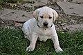 Cute puppy(3).jpg
