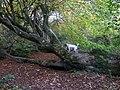 Cwm Rhigian - geograph.org.uk - 609876.jpg