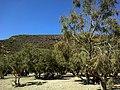 Cyclades Folegandros Angali Agios Nikolaos Plage Tamaris - panoramio.jpg