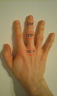 DIP, PIP and MCP joints of hand.jpg