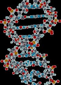 ap biology dna wikibooks open books for an open world