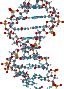 DNA in color.png