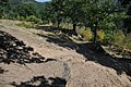 Dacian Fortress of Capalna 047.jpg