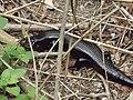 Dairyville Wildlife - panoramio.jpg